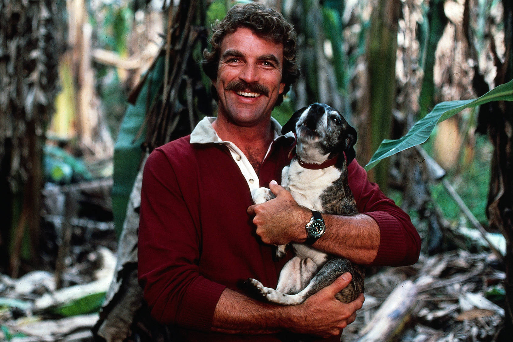 The man with the moustache – Magnum P.I. celebrates his 35th anniversary of the show's premiere, Getty Images.