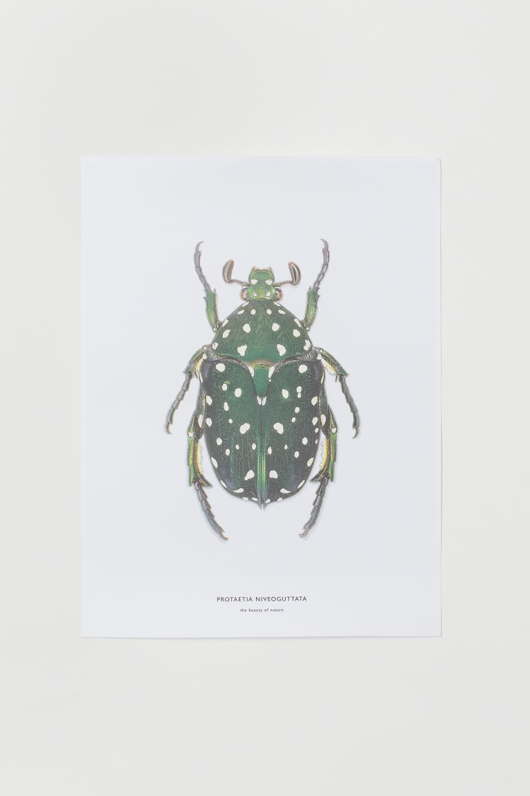 Poster - White/Insect - Home All | H&M GB