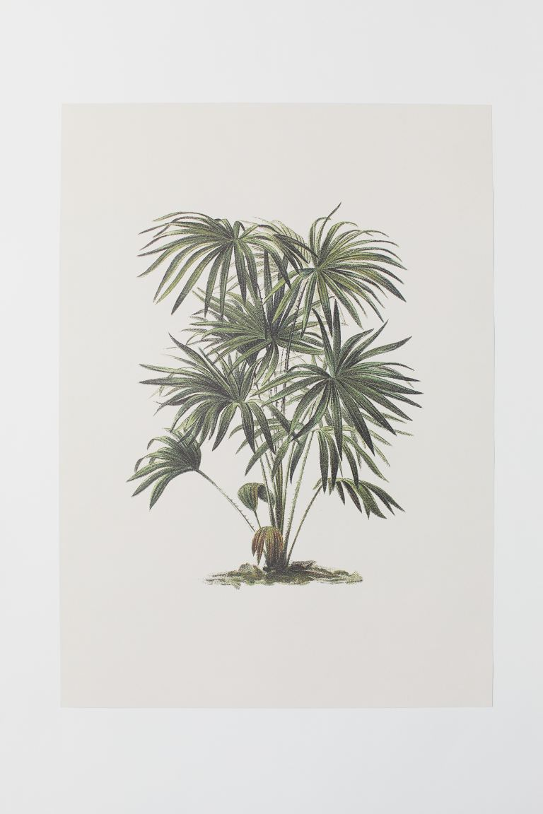 Poster - Light green/palm tree - Home All | H&M US