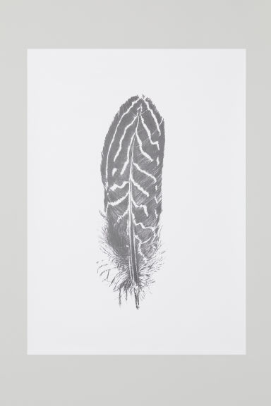 Poster 50x70 cm - White/Feather - Home All | H&M CN